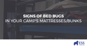 Signs of Bed Bugs in Your Camp's Mattresses/Bunks
