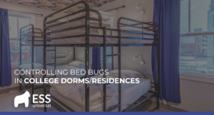 Controlling Bed Bugs in College Dorms/Residences