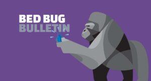 Bed Bugs vs. Fleas